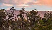 Coastal vegetation with mountains in background near Haast, UNESCO World Heritage Area, South Westland, New Zealand, NZ