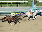 Februay 5, 2011.Zazu riden by Joel Rosarioa wins The Las Virgenes Stakes at Santa Anita Park, Arcadia, CA