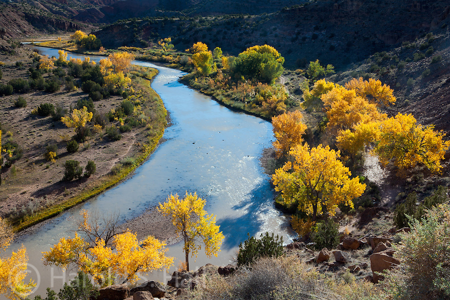A curve in the Chama River winds through many cottonwood trees north of Abiquiu, New Mexico