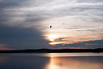 Sunset over the Wachusett Reservoir in Clinton, Massachusetts with gull flying through frame mid-flight