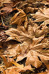 Close-up of leaves.
