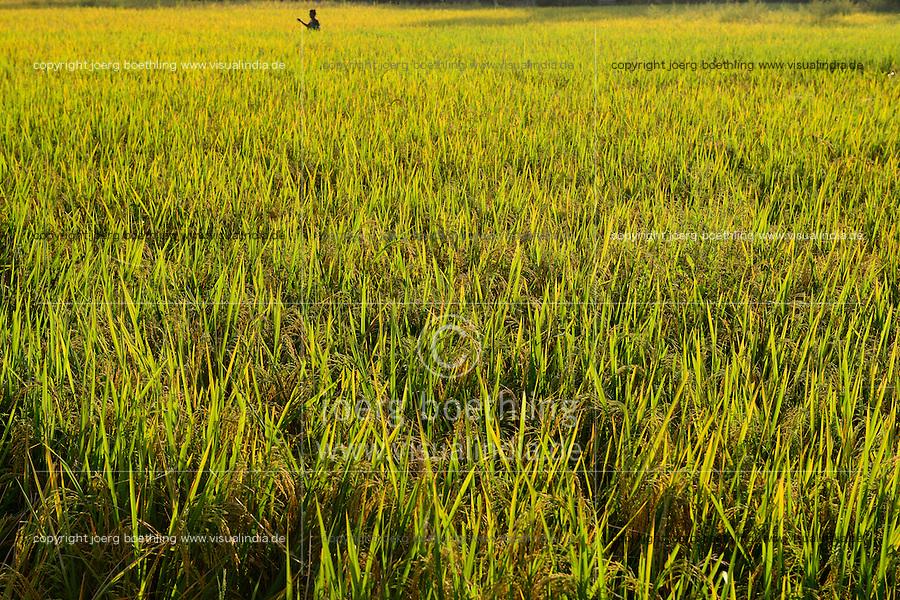NEPAL, Terai, Tandi, the Terai is the grain basket of the country, rice farming, rice field / NEPAL, Terai, Tandi, das Terai ist die Kornkammer Nepals, Reisfelder