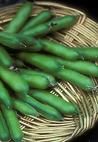 Beans Martok broad bean variety on wicker plate harvested and fresh