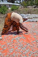 Kizimkazi, Zanzibar, Tanzania.  Lady Spreading Anchovies to Dry.