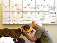 A schedule board dominates the room as a greyhound gets its nails trimmed by volunteers at Greyhound Pets, Inc. in Woodinville, WA a couple days after their arrival from a cross country journey that originally began in Florida, on June 21, 2015.