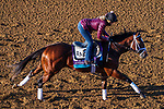 November 3, 2020: Mutasaabeq, trained by trainer Todd A. Pletcher, exercises in preparation for the Breeders' Cup Juvenile Turf at Keeneland Racetrack in Lexington, Kentucky on November 3, 2020. John Voorhees/Eclipse Sportswire/Breeders Cup/CSM