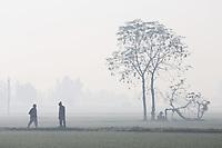 India - Punjab - Agriculture & Pesticides [2013]