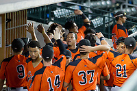 AZL Giants first baseman Beicker Mendoza (12) is congratulated by teammates after hitting a home run against the AZL Cubs on July 17, 2017 at Sloan Park in Mesa, Arizona. AZL Giants defeated the AZL Cubs 12-7. (Zachary Lucy/Four Seam Images)