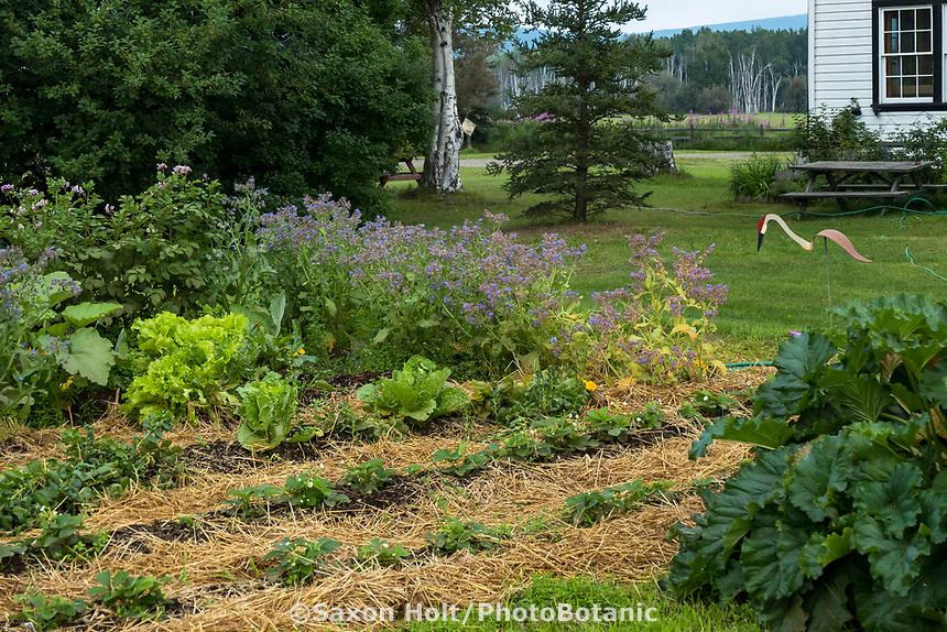 Vegetable garden with straw mulch at historic Creamer's Dairy farmhouse at Creamer's Field, Fairbanks Alaska