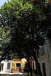 A door way under orange trees in Seville, Spain.