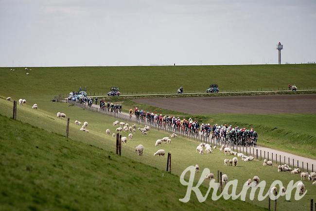 speeding through Zeeland (NED) at +50km/h in the first hour<br /> <br /> 109th Scheldeprijs 2021 (ME/1.Pro)<br /> 1 day race from Terneuzen (NED) to Schoten (BEL): 194km<br /> <br /> ©kramon