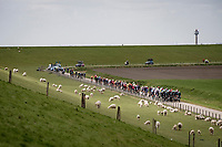 speeding through Zeeland (NED) at +50km/h in the first hour<br /> <br /> 109th Scheldeprijs 2021 (ME/1.Pro)<br /> 1 day race from Terneuzen (NED) to Schoten (BEL): 194km<br /> <br /> ©kramon