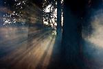 Sequoia Grove Winery, Napa, California