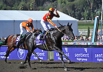 25 October 2008:  Midnight Lute, jockey Garrett Gomez aboard, gobbled up the field at Santa Anita Race Track in Arcadia, California to score back-to-back Sentient Breeders Cup Sprint wins.
