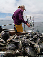 Bo Christenson, Quahoggers at work on Narragaanseet bay near Warwick, Rhode Island