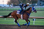 November 5, 2020: Sharp Samurai, trained by trainer Mark Glatt, exercises in preparation for the Breeders' Cup Mile at Keeneland Racetrack in Lexington, Kentucky on November 5, 2020. Scott Serio/Eclipse Sportswire/Breeders Cup/CSM