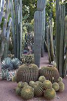 Cacti at the Majorelle Gardens, Marrakech, Morocco