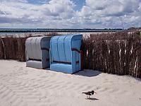 Austernfischer, Strandkörbe am Südstrand, Düne, Insel Helgoland, Schleswig-Holstein, Deutschland, Europa<br /> oytercatcher, beach chairs at southern beach, dune, Helgoland island, district Pinneberg, Schleswig-Holstein, Germany, Europe