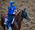 DEL MAR, CA - OCTOBER 30: Masar, owned by Godolphin Stable Lessee and trained by Charlie Appleby, exercises in preparation for Breeders' Cup Juvenile Turf at Del Mar Thoroughbred Club on October 30, 2017 in Del Mar, California. (Photo by Jon Durr/Eclipse Sportswire/Breeders Cup)