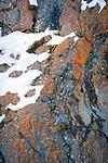 Oesterreich, Kaernten, Nationalpark Hohe Tauern: Flechten und Moose   Austria, Carinthia, High Tauern National Park: lichens and mosses