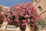 T-055 Oleander in Jerusalem