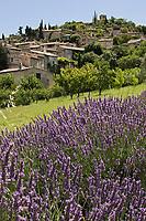 Europe/France/Rhône-Alpes/26/Drôme/Mirmande: le Village perché classé parmi les plus beaux villages de France avec un champ de lavande en premier plan