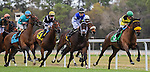 OLDSMAR, FLORIDA - MARCH 12:  Tepin #6, ridden by jockey Julien R. Leparoux, sets a new track record and wins the Hillsborough Stakes at Tampa Bay Downs on March 12, 2016 in Oldsmar, Florida (photo by Doug DeFelice/Eclipse Sportswire/Getty Images)