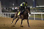 DUBAI,UNITED ARAB EMIRATES-MARCH 23: Ribchester,trained by Richard Fahey,exercises in preparation for the Dubai Turf at Meydan Racecourse on March 23,2017 in Dubai,United Arab Emirates (Photo by Kaz Ishida/Eclipse Sportswire/Getty Images)