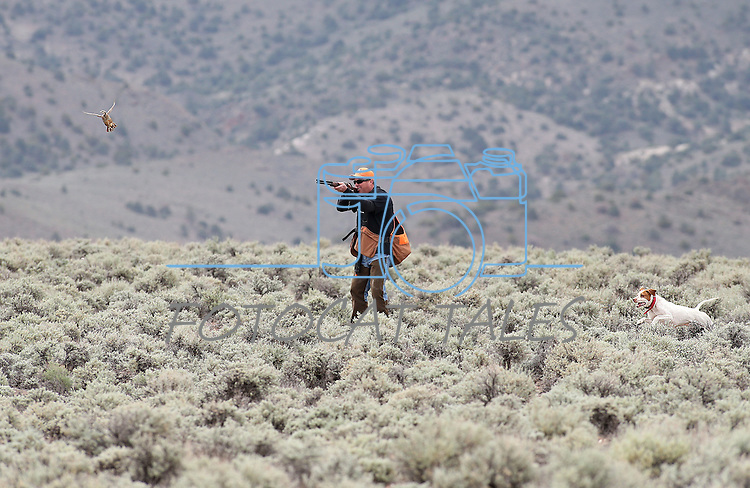 Competitor Paul Predere competes with Red during the U.S. Bird Dogs Western State Nationals in Mound House, Nev., on Friday, April 24, 2015. <br /> Photo by Cathleen Allison