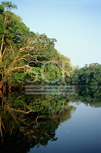 Amazon, Brazil. Rainforest river bank reflected in the water of the river.