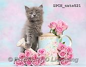 Xavier, ANIMALS, REALISTISCHE TIERE, ANIMALES REALISTICOS, cats, photos+++++,SPCHCATS821,#A#