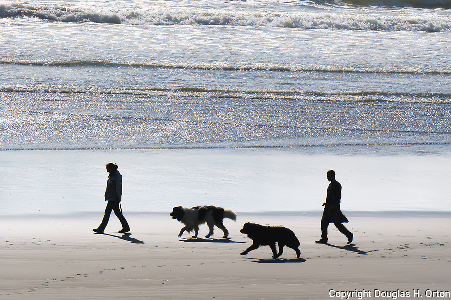 Couple and dogs silhouette.  Kalaloch Beach in Olympic National Park, Washington.  Beaches in the Kalaloch area of Olympic National Park, identified by trail numbers, are remote and wild.  Olympic Peninsula, Olympic Mountains, Olympic National Park, Washington State, USA.
