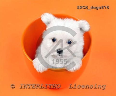 Xavier, ANIMALS, dogs, photos+++++,SPCHDOGS876,#a# Hunde, perros