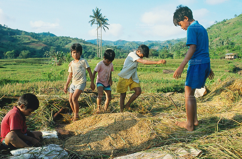Philippines. Negros Island. Province of Negros Occidental, located in the  Western Visayas region. Barangay (village) Camao. A group of young children walk on harvested   organic rice in order to collect rice grains. Child labor. Terrace cultivation. Rice growing in fields. Sustainable agriculture.  © 1999 Didier Ruef
