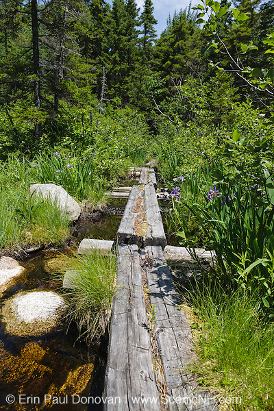 Trail puncheons (bog bridges) in wetlands area along Shoal Pond Trail in the Pemigewasset Wilderness of Lincoln, New Hampshire