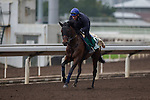 DEC 12,2015: Ming Dynasty ,trained by Mikel Delzangles,exercises in preparation for the Hong Kong Vase at Sha Tin in New Territories,Hong Kong. Kazushi Ishida/ESW/CSM