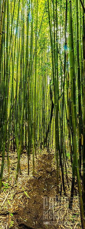 A small dirt trail disappears into a huge green bamboo forest in Honolulu, O'ahu.