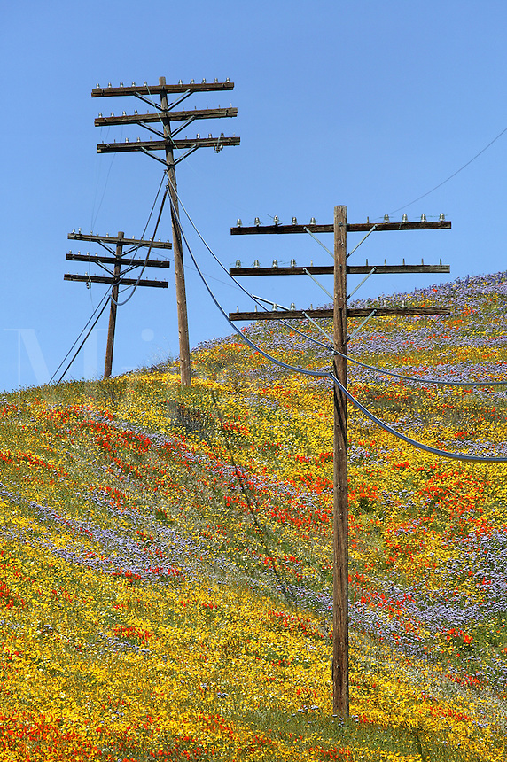 Powerline and Wildflowers near Gorman, California
