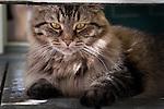 "Cat named ""Pretty"" lounging in the shade. in La Villita, San Antonio, Texas."