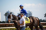 Hallandale Beach, FL- #4 Penwith with jockey Luis Saez after winning the G2 Royal Delta Stakes,   Gulfstream Park. (Photo by Arron Haggart)