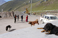 Dogs outside of a monastery in the town of Zaduo on the Tibetan Plateau, in western China.