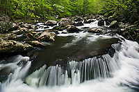 Spring rain along Middle Prong of Little River, Tremont