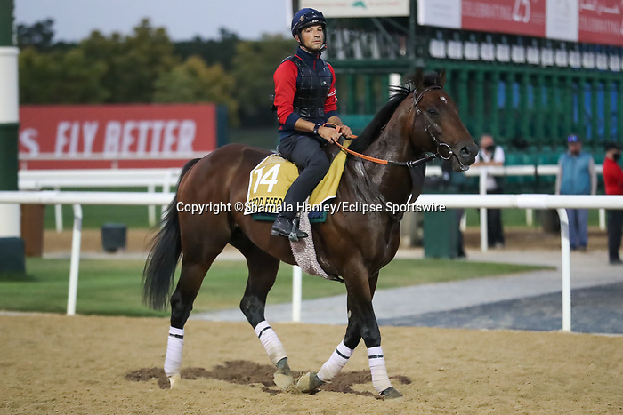 March 25, 2021: Golden Shaheen contender Good Effort (IRE) trains on the track for trainer Ismail Mohammed at Meydan Racecourse, Dubai, UAE.<br />