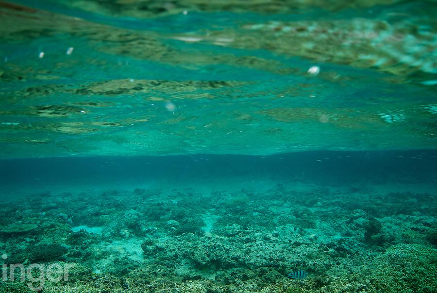 Coral Reef at Tonga