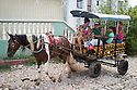 27/07/18<br /> <br /> Family on colourful horse and cart, Trinidad, Cuba.<br /> <br /> All Rights Reserved, F Stop Press Ltd. (0)1335 344240 +44 (0)7765 242650  www.fstoppress.com rod@fstoppress.com