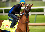 LOUISVILLE, KY - MAY 04: Gun Runner battles the exercise rider during a gallop in preparation for the Kentucky Derby at Churchill Downs on May 04, 2016 in Louisville, Kentucky.(Photo by Alex Evers/Eclipse Sportswire/Getty Images)