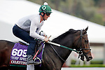 ARCADIA, CA - OCT 31: Celestine, owned by Phaedrus Flights LLC and trained by William I. Mott, exercises in preparation for the Breeders' Cup Turf Sprint  at Santa Anita Park on October 31, 2016 in Arcadia, California. (Photo by Zoe Metz/Eclipse Sportswire/Breeders Cup)