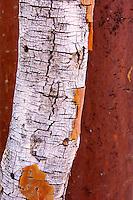 Tree bark at Brandberg