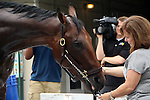 May18, 2015  American Pharoah returned to Churchill Downs following his win in the Preakness Stakes.  He will prepare for the Belmont Stakes in New York on June 6. Owner Zayat Stables, trainer Bob Baffert. By Pioneerof The Nile x Littleprincessemma (Yankee Gentleman.) ©Mary M. Meek/ESW/CSM