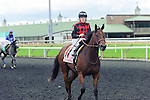Starless Night(11) with Jockey Emma-Jayne Wilson aboard after the Natalma Stakes at Woodbine Race Course in Toronto, Canada on September 13, 2014 with Jockey Patrick Husbands aboard.